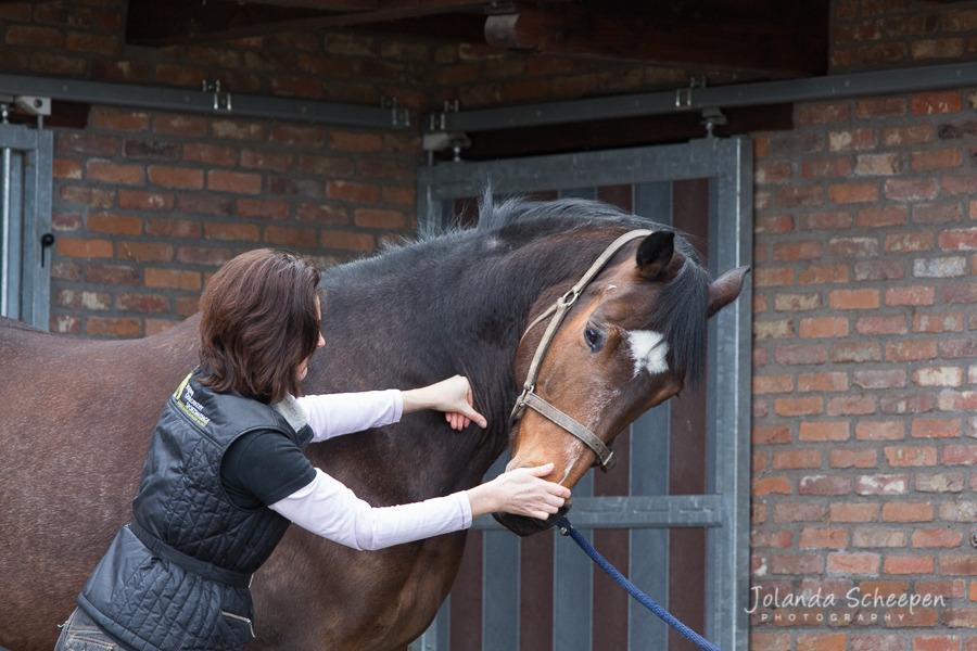 wortels voor paarden