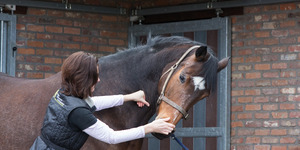 Ingrid De Boelpaep – Steenhuffel - Sportmassage voor paarden