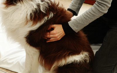 Ingrid De Boelpaep - osteopathy for dogs