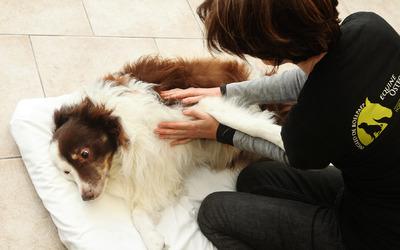 Ingrid De Boelpaep - ostéopathe canine