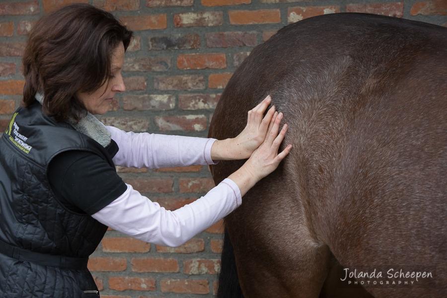 Ingrid De Boelpaep – Steenhuffel - Sportsmassage for horses