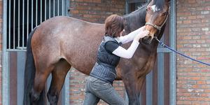 Ingrid De Boelpaep – Massage sportif équine